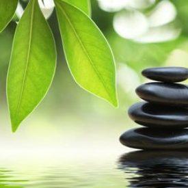 services-wellness
